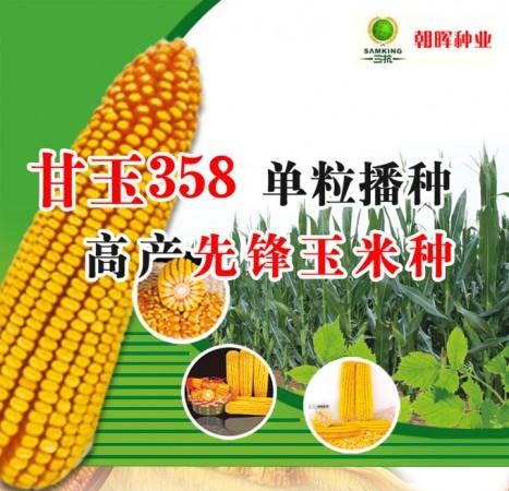 甘玉358——单粒播种,高产先锋玉米种