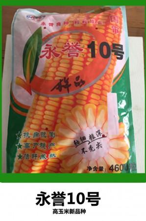 高产玉米种子永誉10号