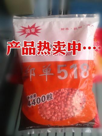 玉米高产品种郑单518